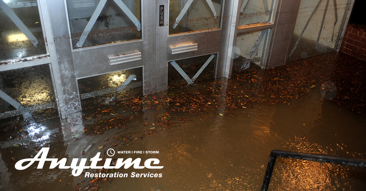 Professional Water Damage Mitigation in Flat Rock, MI