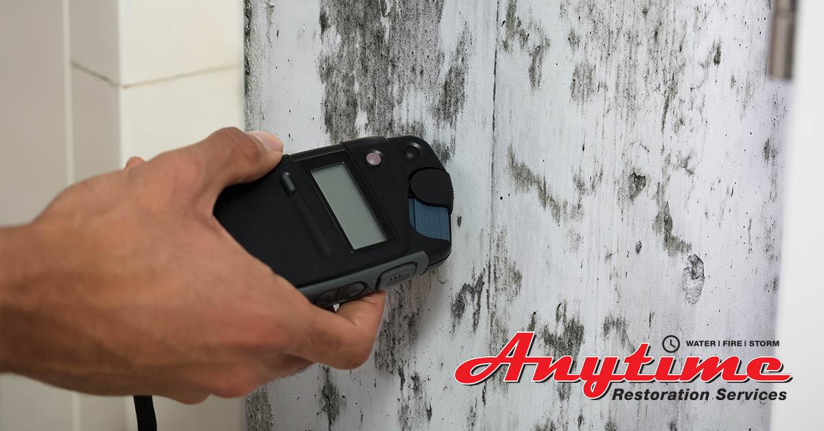 Certified Mold Removal in Sterling Heights, MI