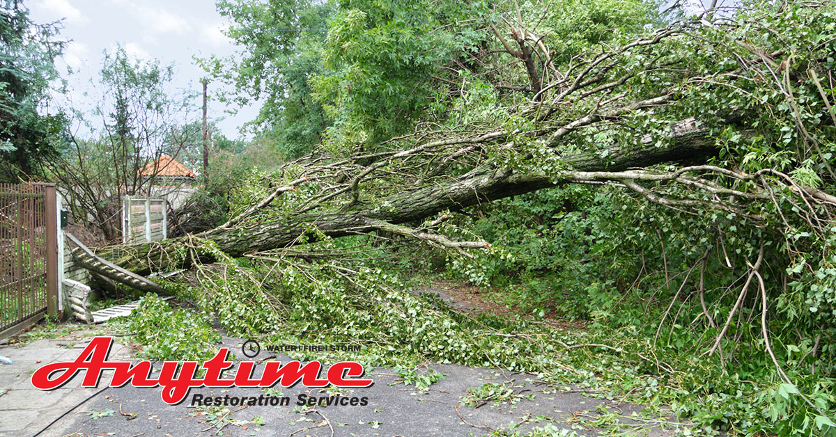 Certified Emergency Disaster Restoration Services in Traverse City, MI