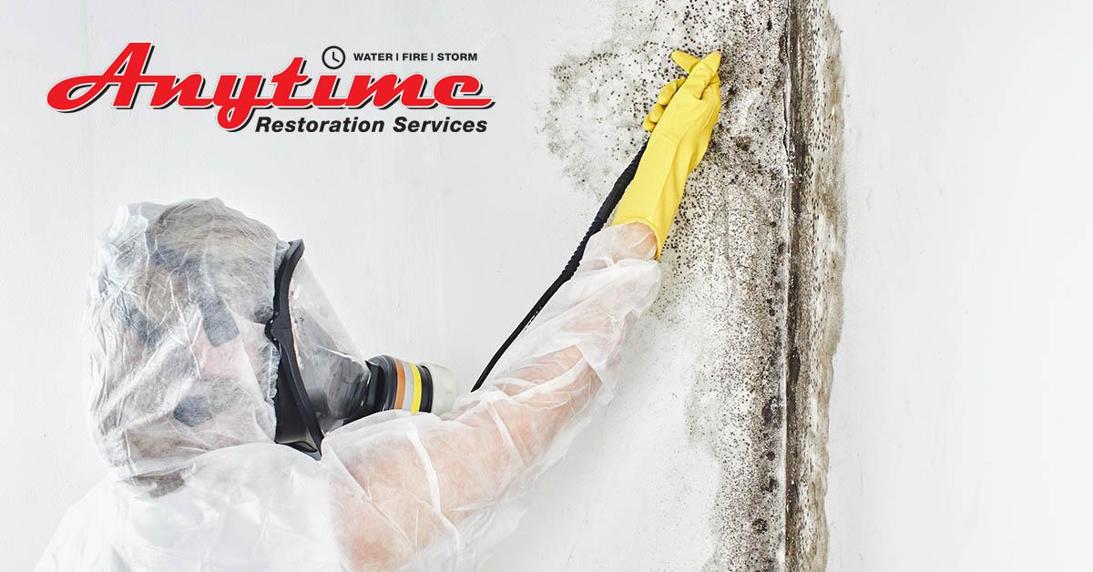Certified Mold Remediation in St. Clair, MI