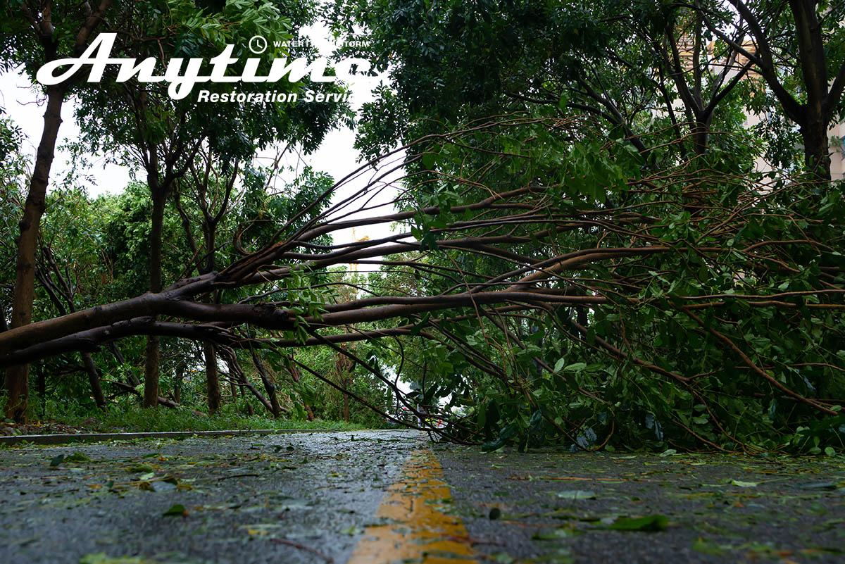 Certified Wind Damage Cleanup in Sterling Heights, MI