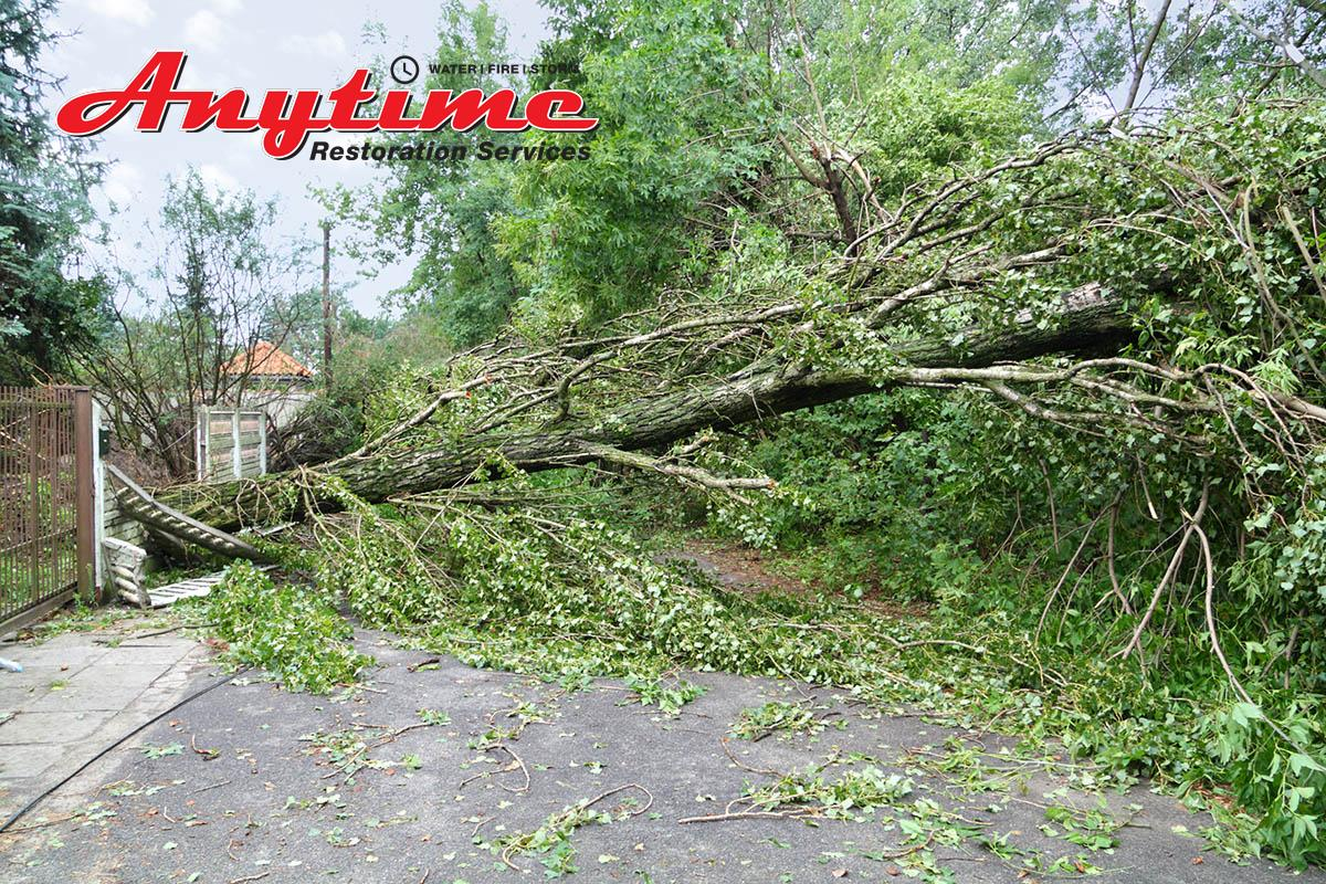 Certified Storm Damage Remediation in St. Clair, MI