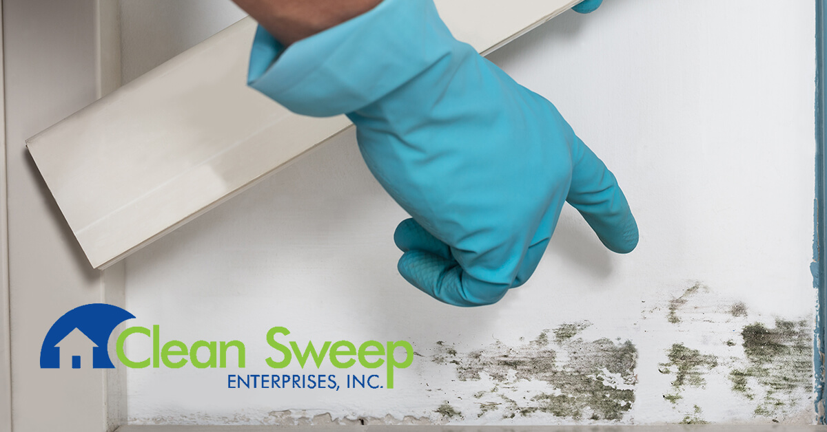 Mold Removal in New Windsor, MD
