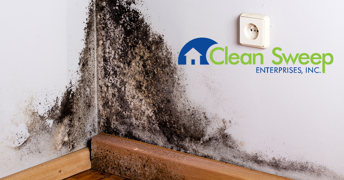 Mold Removal in Buckeystown, MD