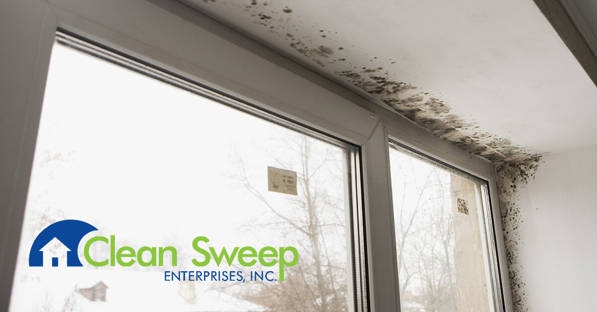 Mold Removal in Frederick, MD