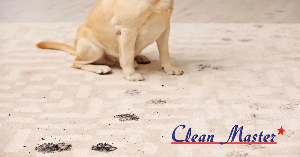Professional Carpet Cleaning in Columbia, LA