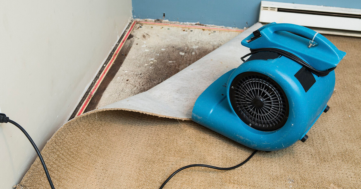 Certified Water Damage Cleanup in Forest Hills, TN