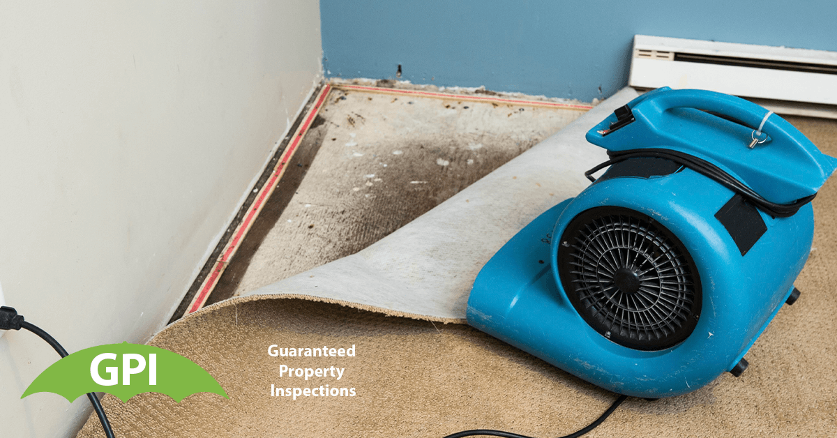Mold Inspection in Yorba Linda, CA