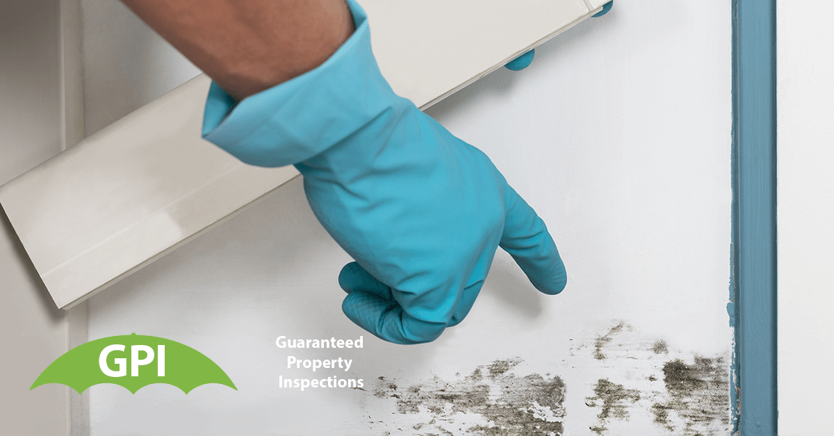 Commercial Mold Testing in Newport Beach, CA