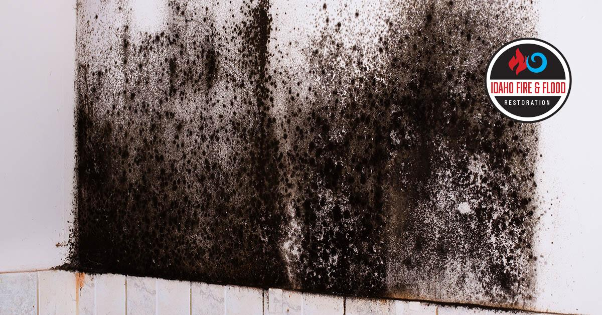 IICRC Certified Mold Removal Contractors in Garden City, ID