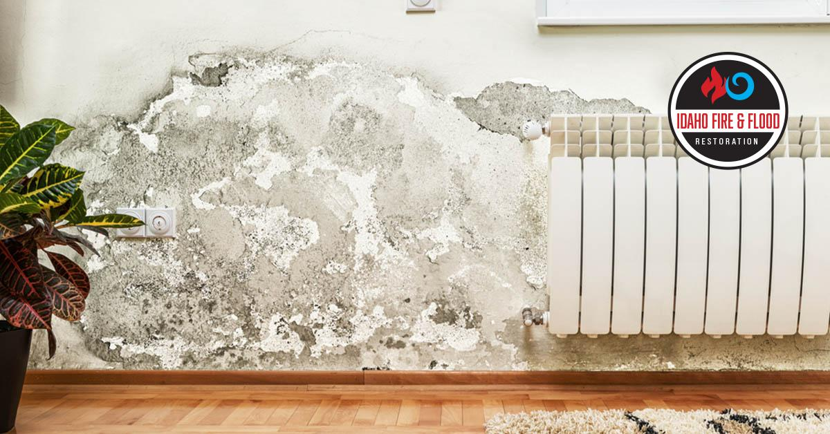 IICRC Certified Mold Damage restoration in Eagle, ID