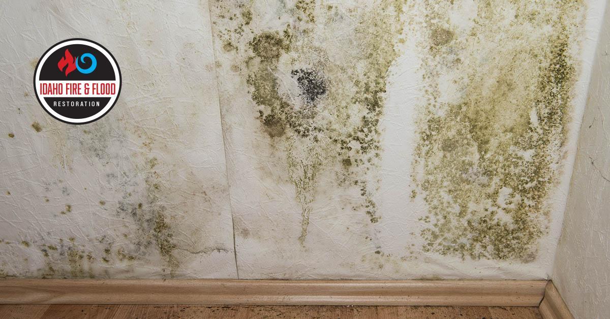 IICRC Certified Mold Remediation in Nampa, ID
