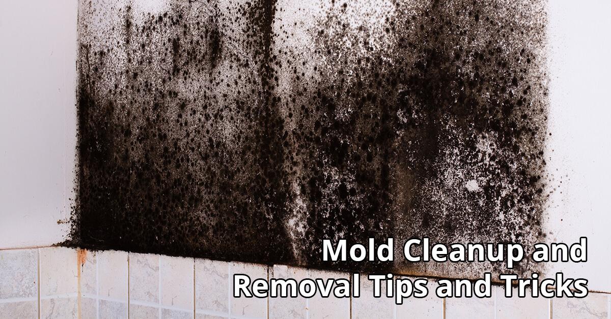 Mold Damage Restoration Tips in Eagle, ID