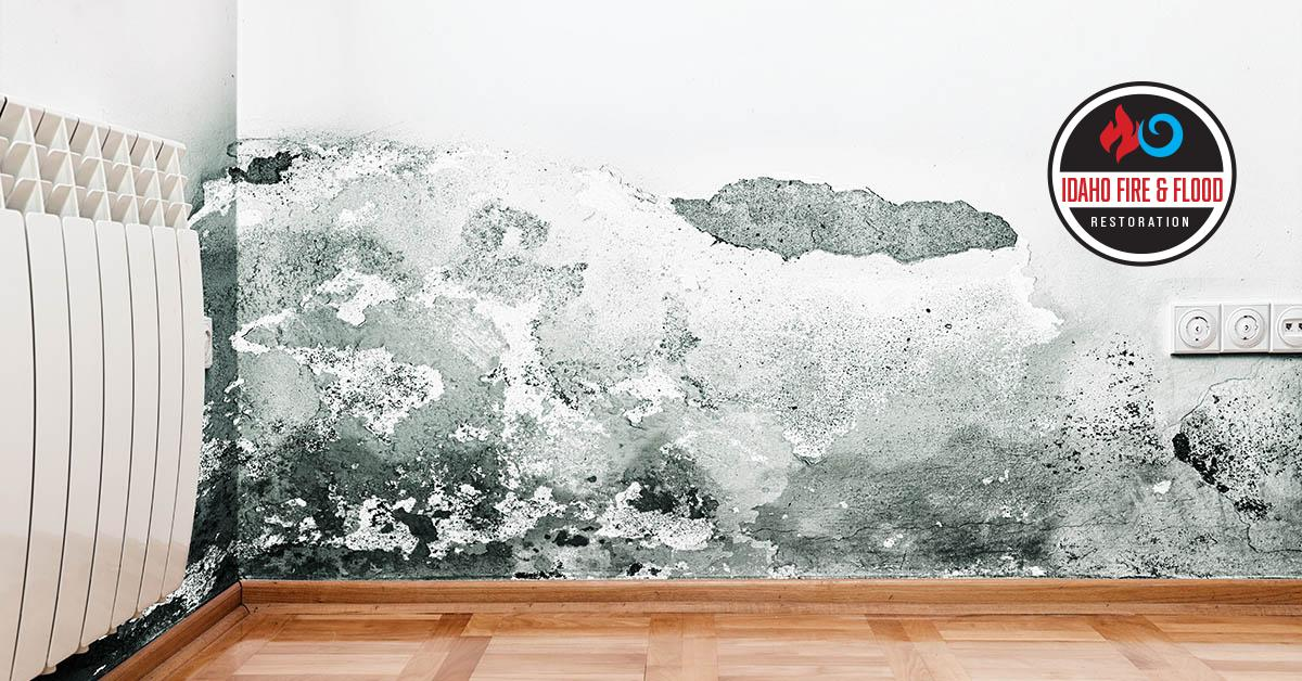 IICRC Certified Mold Removal Company in Boise, ID