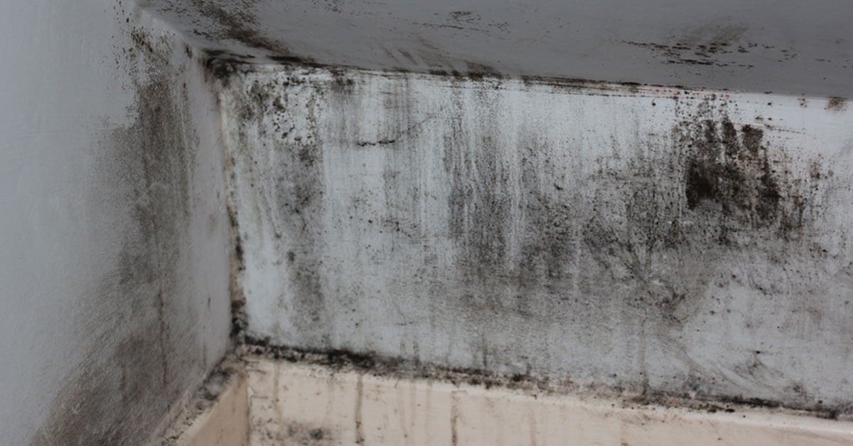 Professional Mold Mitigation in Boise, ID
