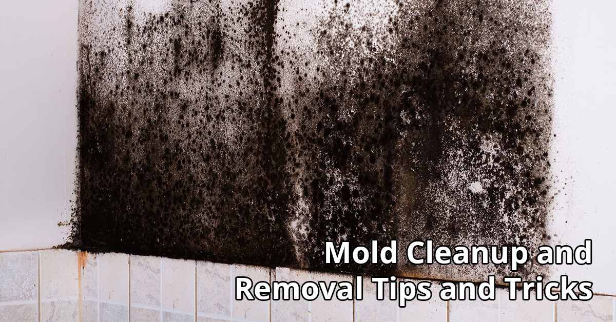 Mold Removal Tips in Idaho Falls, ID