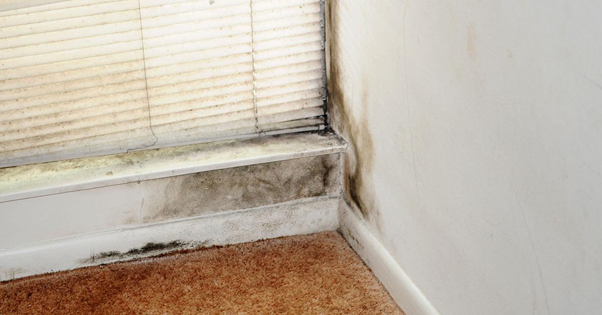 Professional Mold Damage Restoration in Garden City, ID