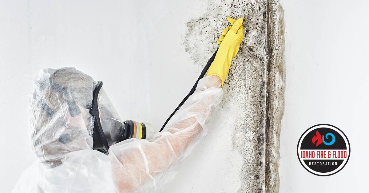 IICRC Certified Mold Damage restoration in Garden City, ID