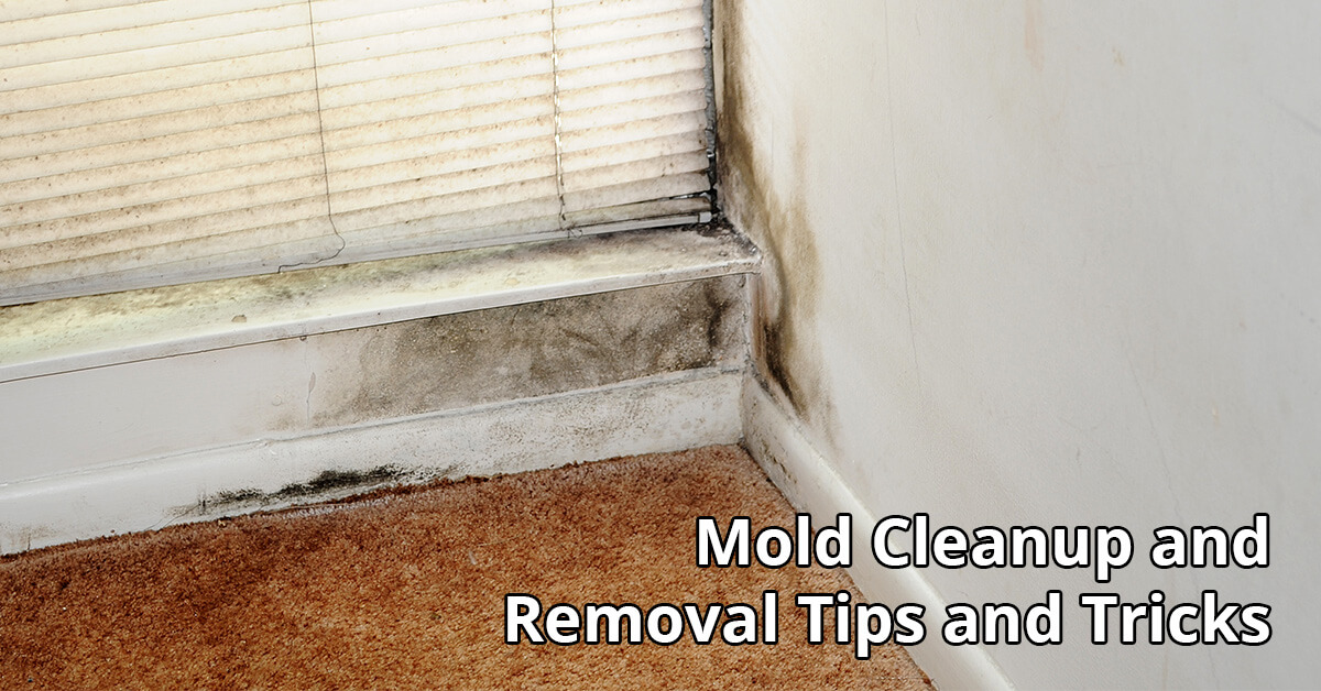 Mold Removal Tips in Star, ID