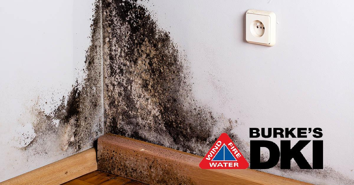 Professional Mold Removal in Coeur d'Alene, ID