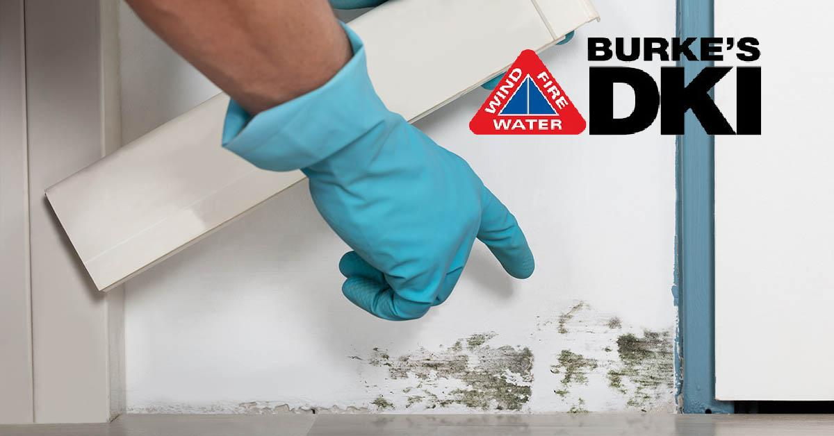 Professional Mold Damage Restoration in Sand Point, ID