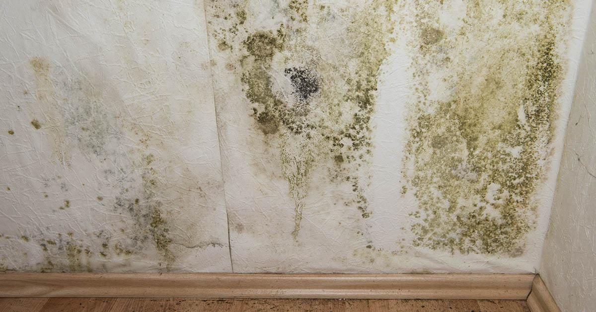 Professional Mold Abatement in Hayden, ID