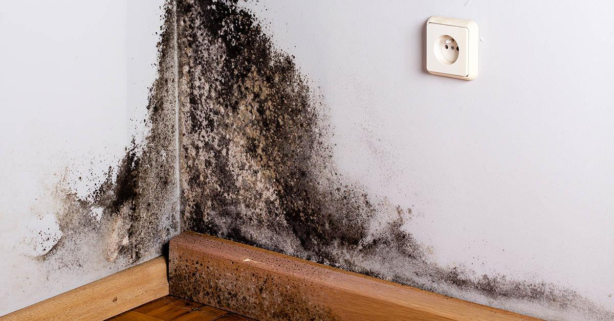 Professional Mold Abatement in Post Falls, ID