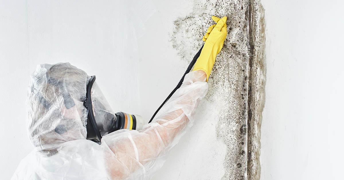Certified Mold Inspections in Wallace, ID