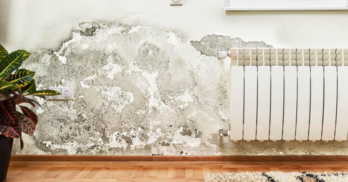 Certified Mold Damage Restoration in Post Falls, ID