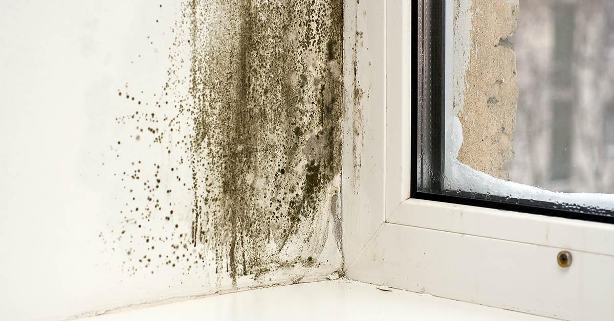 Professional Mold Mitigation in Wallace, ID