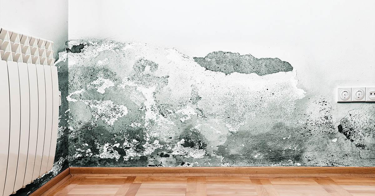 Professional Mold Remediation in Sand Point, ID