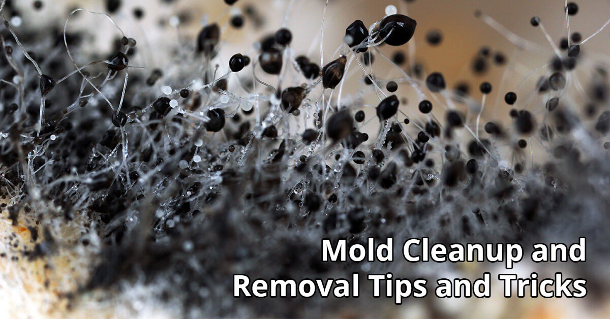 Mold Removal Tips in Post Falls, ID