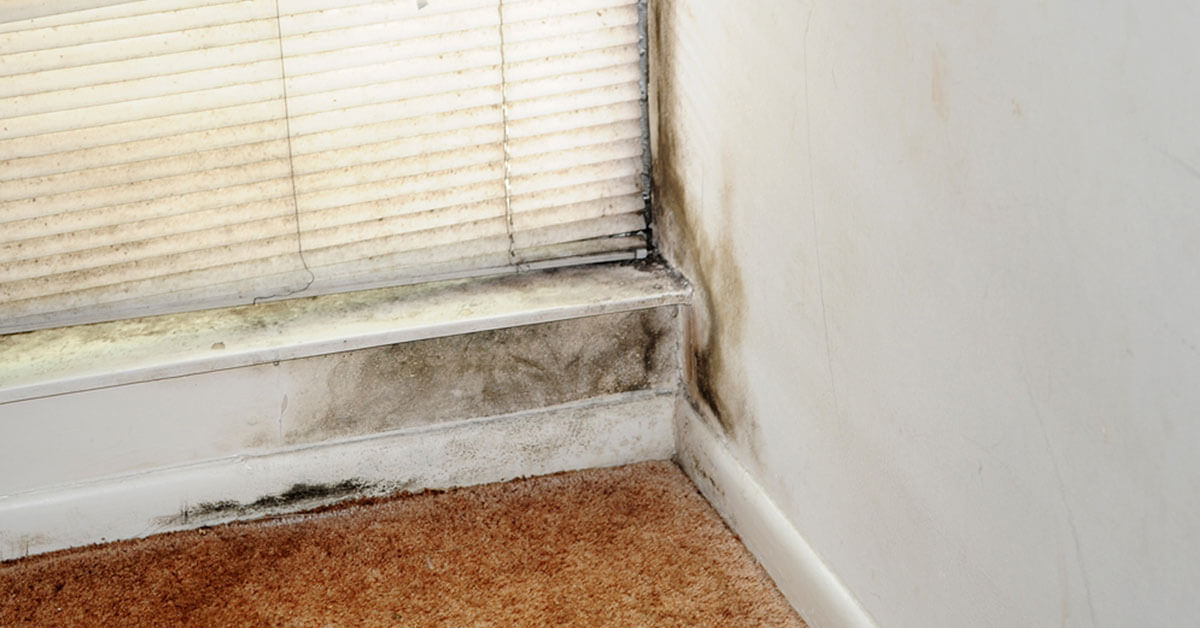 Certified Mold Damage Restoration in Wallace, ID