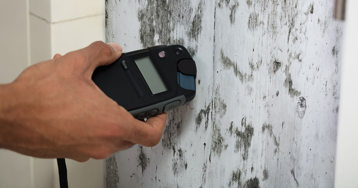 Professional Mold Removal in Point Washington, FL