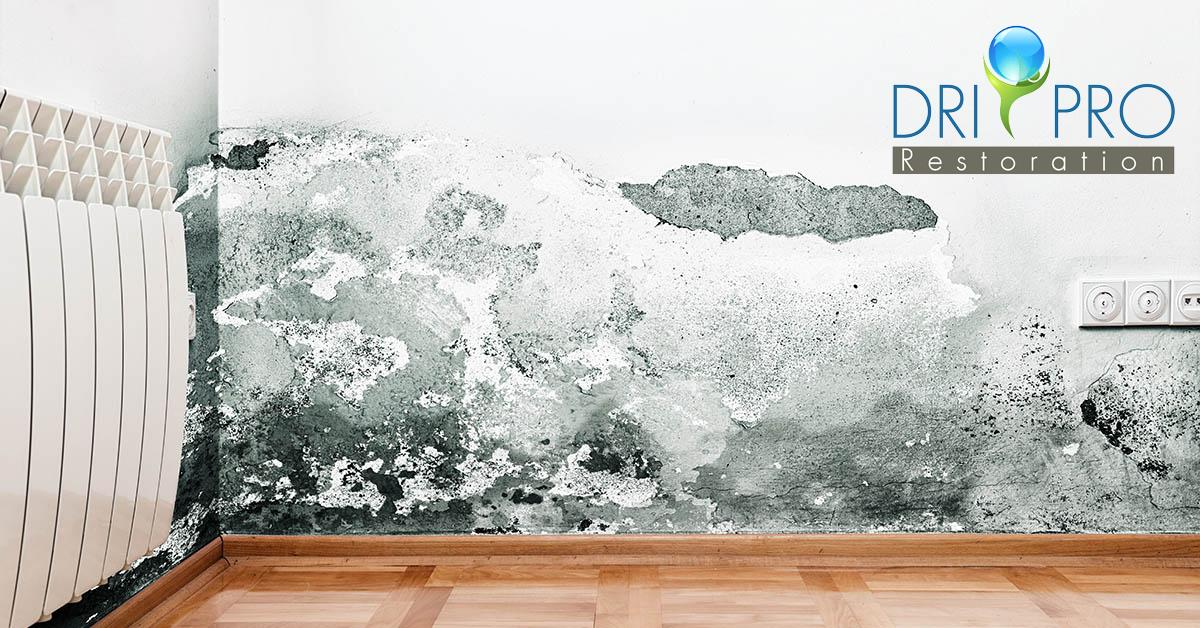 Certified Mold Removal in Freeport, FL