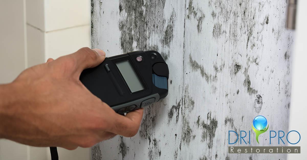 Certified Mold Abatement in Seacrest, FL