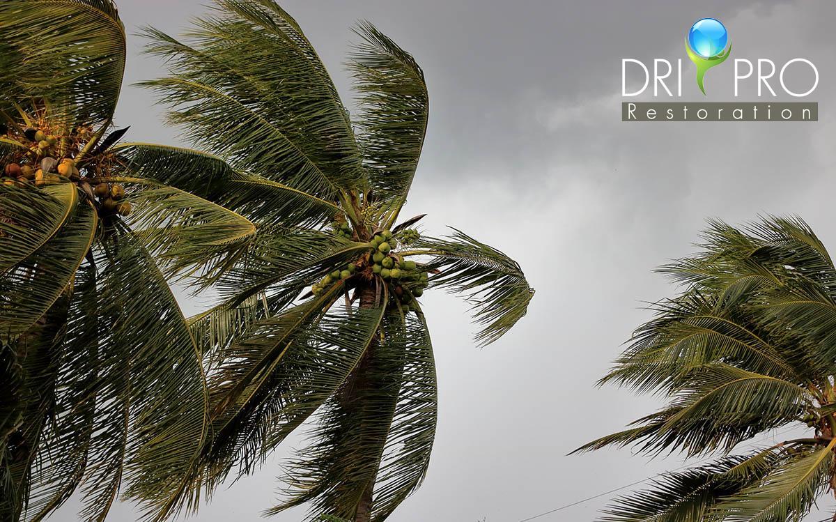 Professional Storm Damage Restoration in Valparaiso, FL