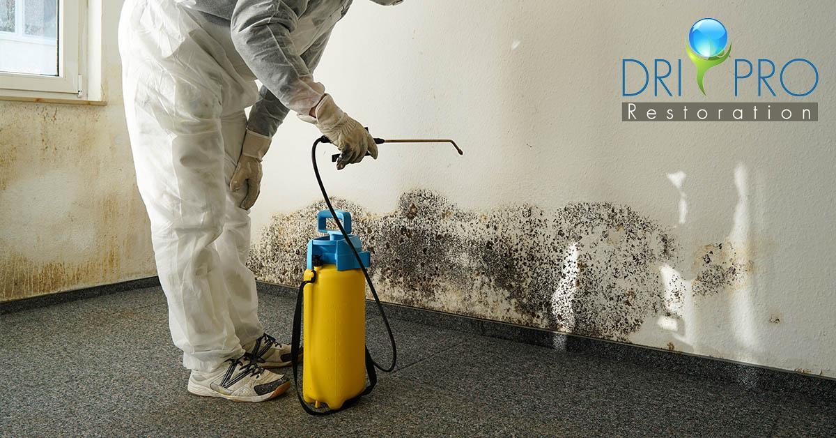Certified Mold Mitigation in Pensacola, FL