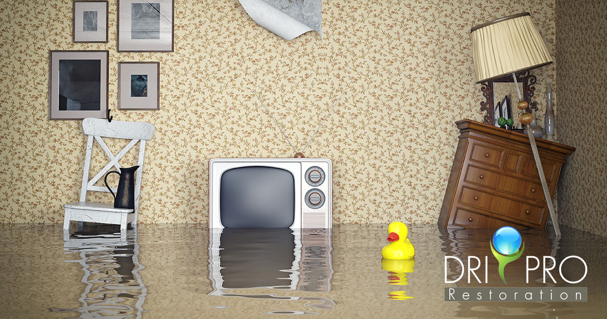 Professional Water Damage Cleanup in Navarre, FL