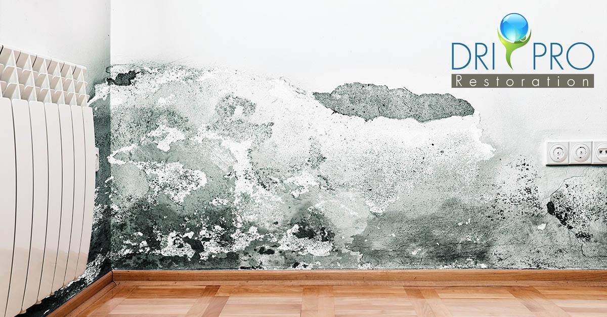 Certified Mold Removal in Grayton Beach, FL