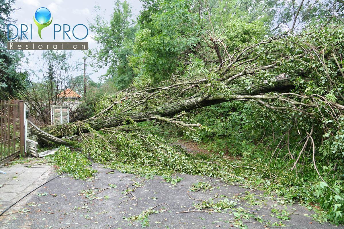 Certified Wind Damage Restoration in Defuniak Springs, FL