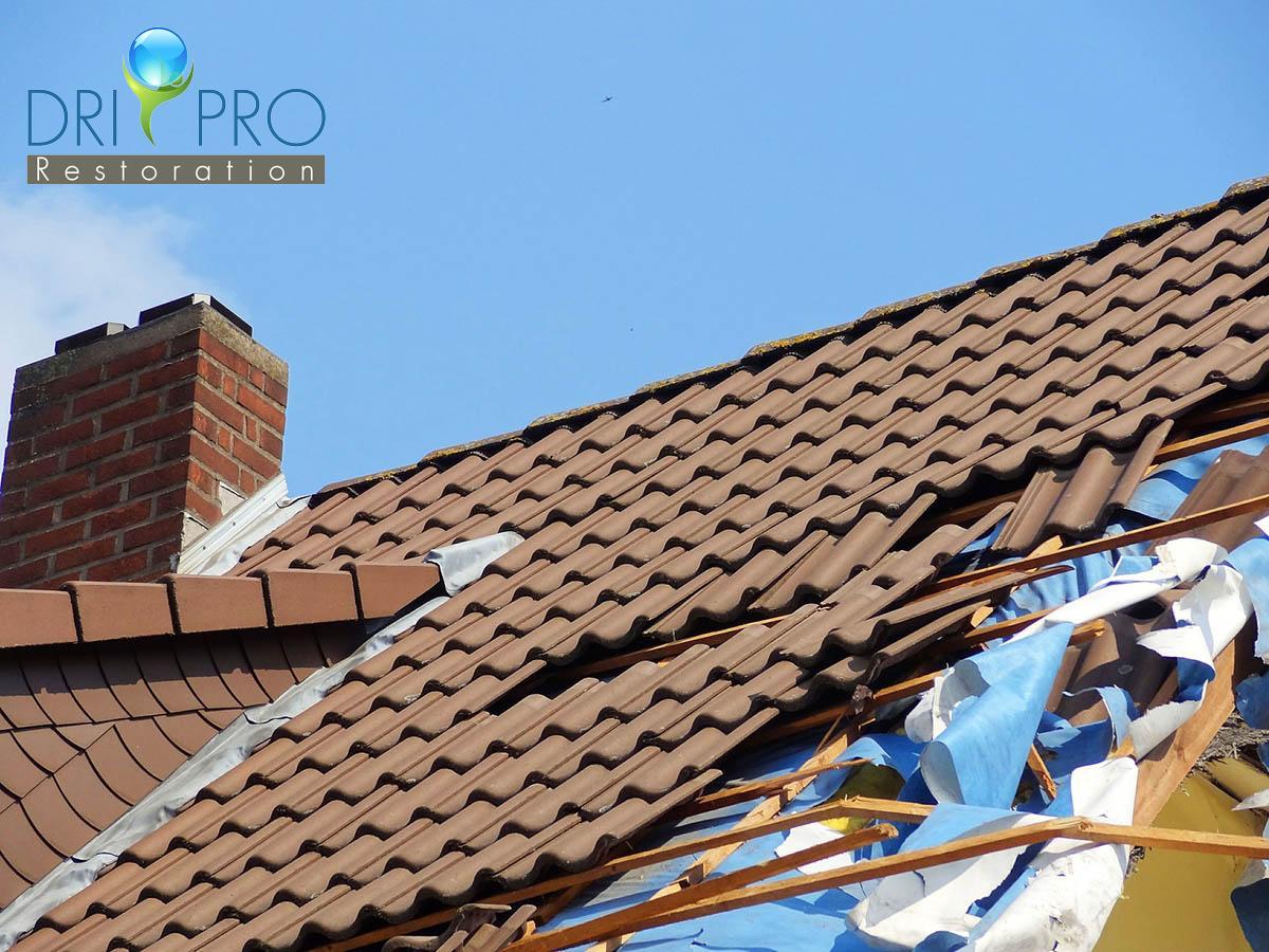 Professional Wind Damage Restoration in Blue Mountain Beach, FL