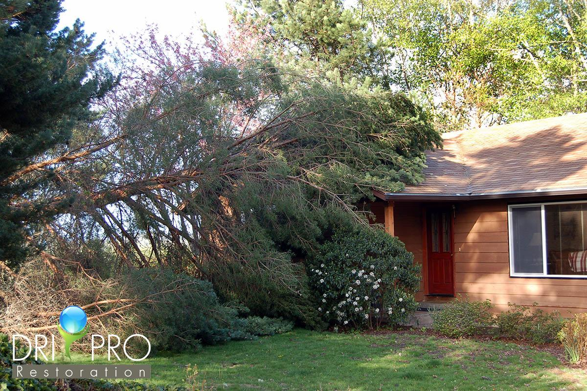 Professional Storm Damage Cleanup in Point Washington, FL
