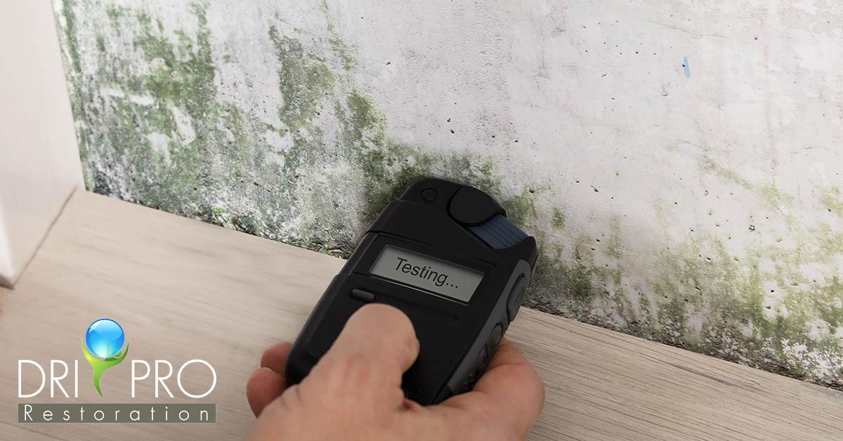 Professional Mold Remediation in Defuniak Springs, FL