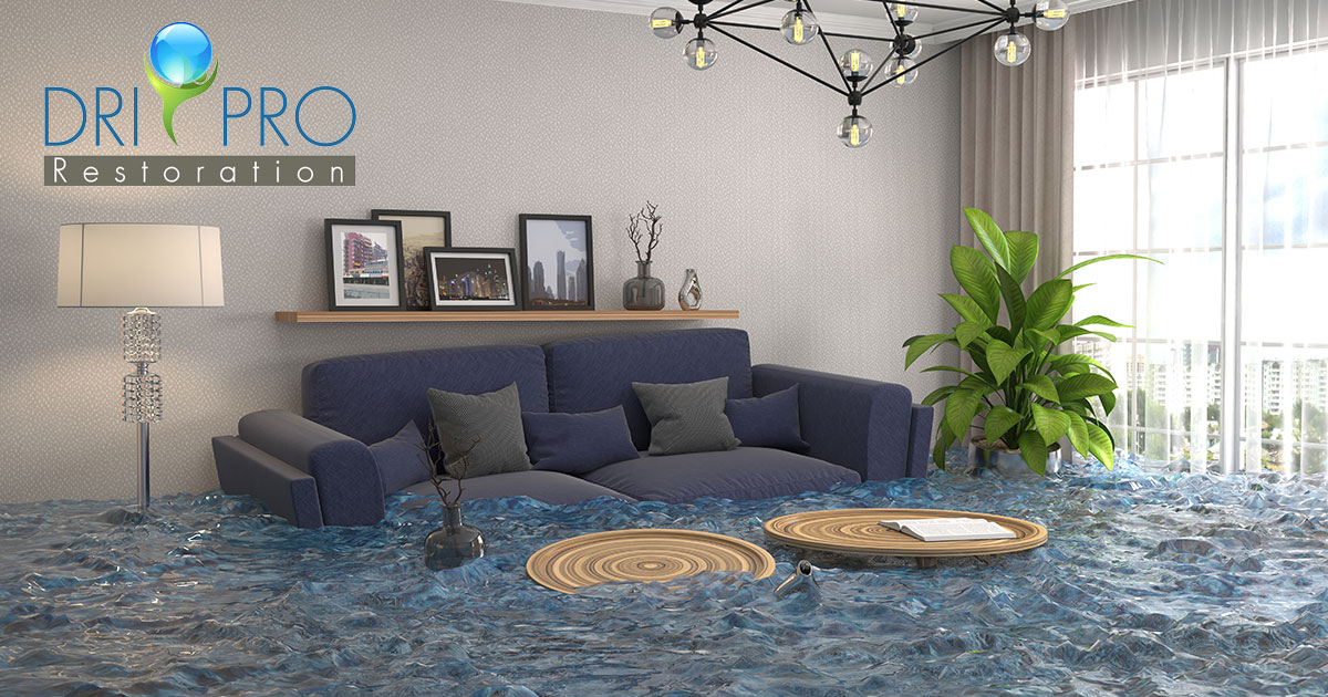 Professional Water Damage Cleanup in Freeport, FL
