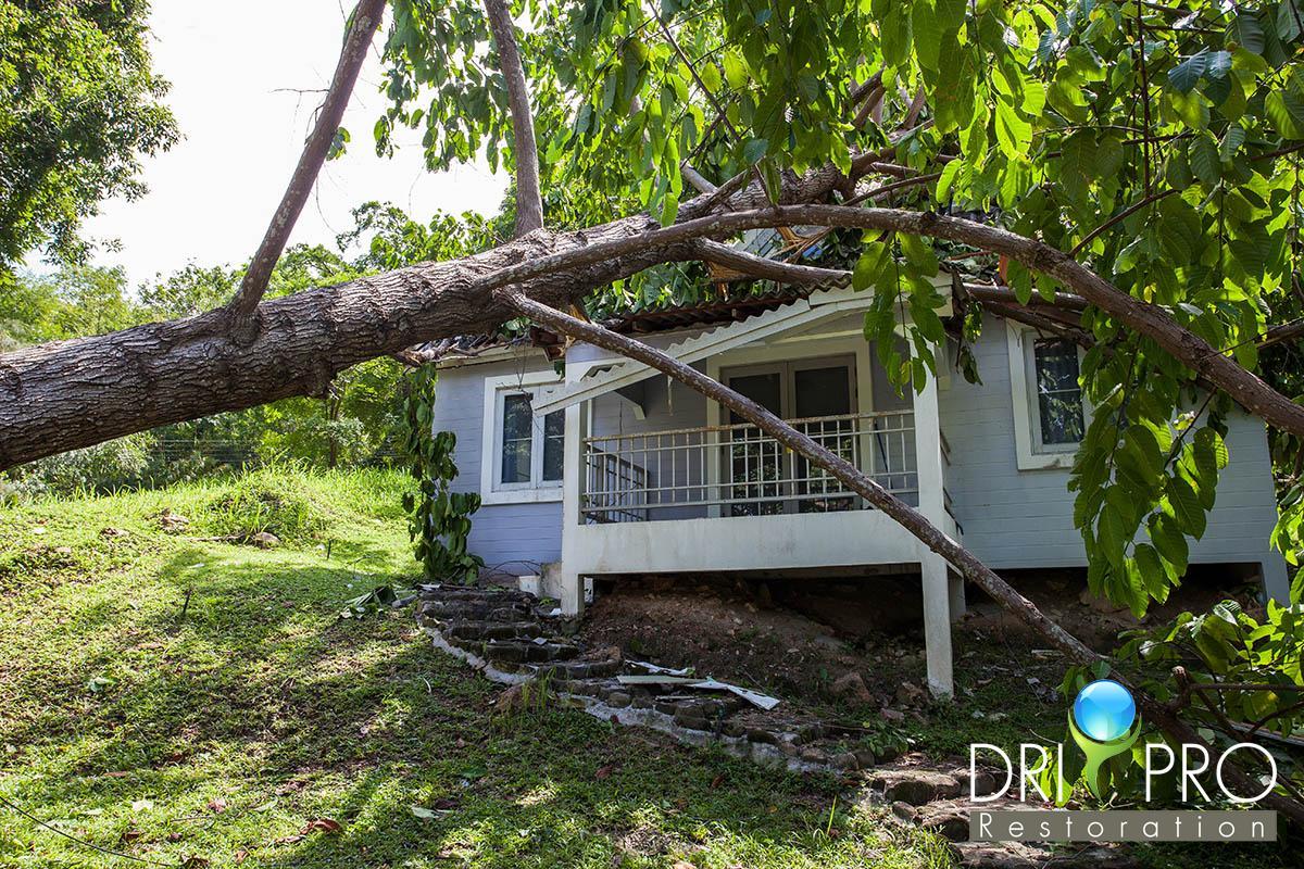 Professional Wind Damage Restoration in Defuniak Springs, FL