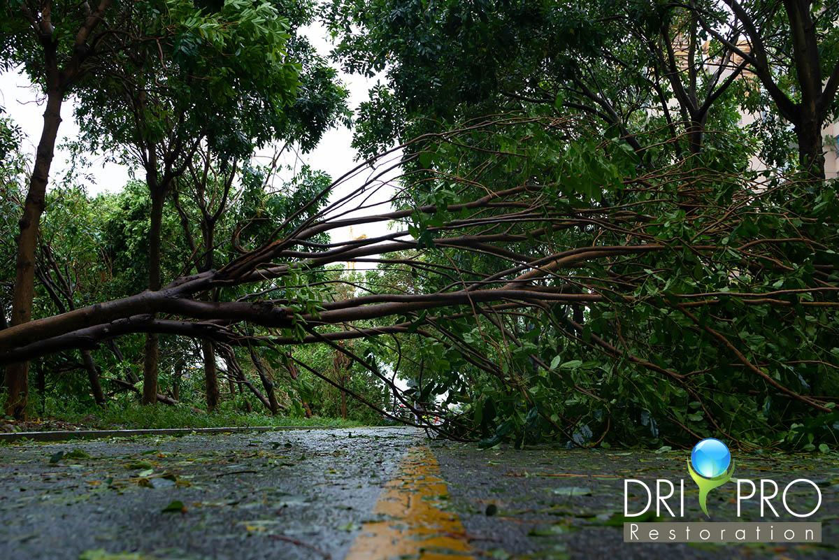 Professional Wind Damage Restoration in Navarre, FL