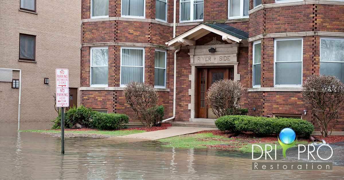 Professional Water Damage Cleanup in Seaside, FL