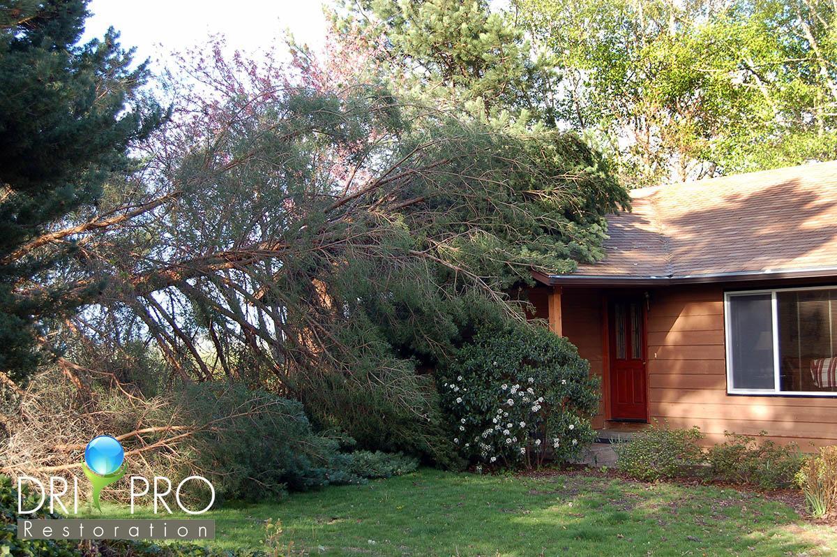 Professional Storm Damage Restoration in Defuniak Springs, FL