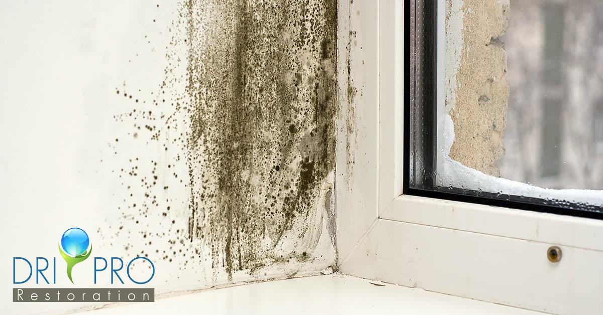 Professional Mold Removal in Pensacola, FL